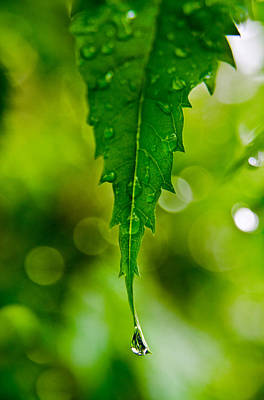 Photograph - Green Leaf by William Shevchuk