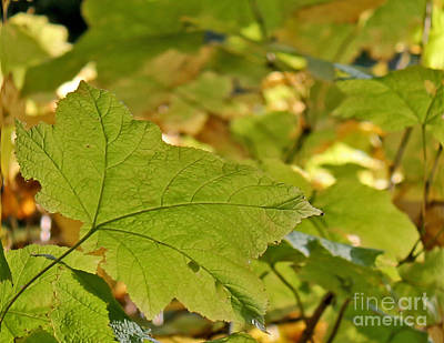 Photograph - Green Leaves by Leone Lund