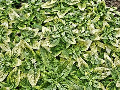 Green Leaves Art Print by Roberto Alamino