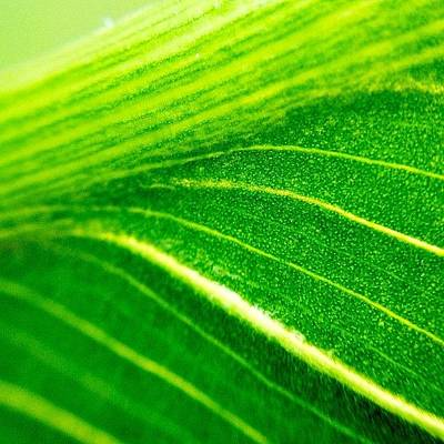Plant Wall Art - Photograph - Green Life by Christopher Campbell