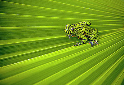 Frog Photograph - Green Lines Of Nature by Jeff R Clow