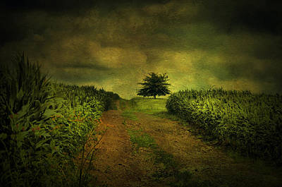 Photograph - Green On Green by Emily Stauring