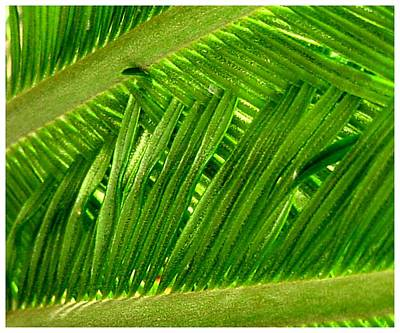 Photograph - Green Over Green by Frank Wickham