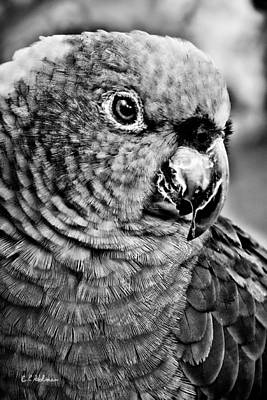 Photograph - Green Parrot - Bw by Christopher Holmes