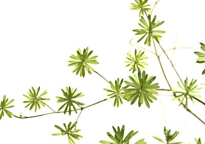 Green Plant Art Print by Blink Images