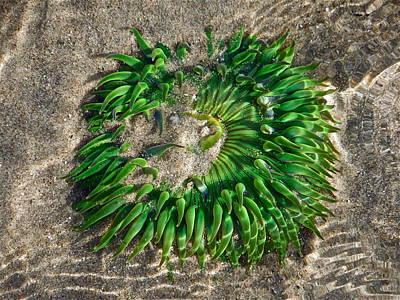 Green Sea Anemone Art Print