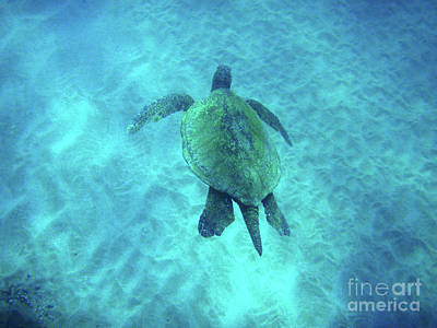 Green Sea Turtle 2 Art Print by Bob Christopher