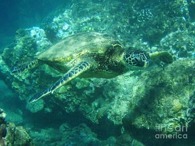 Green Sea Turtle Photograph - Green Sea Turtle Hawaii by Bob Christopher