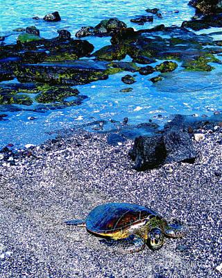 Going Green - Green Sea Turtle Honu by Jerome Stumphauzer