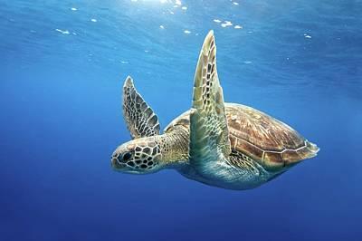 Undersea Photograph - Green Sea Turtle by James R.D. Scott