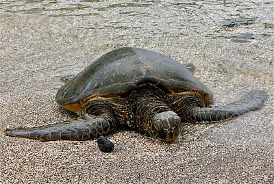 Photograph - Green Sea Turtle by Jocelyn Kahawai