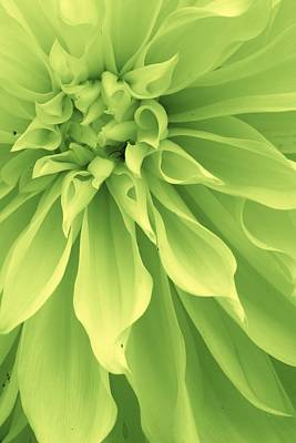 Photograph - Green Sherbet by Bruce Bley