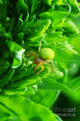 Green Spider 2.0 Art Print by Yhun Suarez