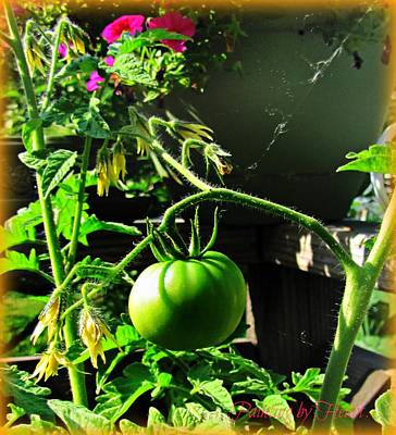 Photograph - Green Tomatoes by Deahn      Benware