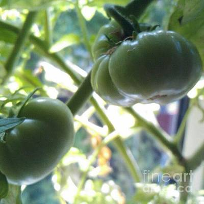 Food And Beverage Photograph - Green #tomatoes #instaprints by Isabella Shores