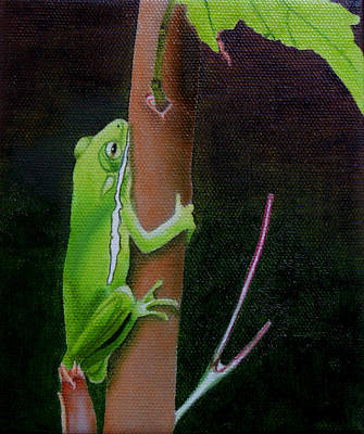 Fauna Painting - Green Tree Frog by Jason M Silverman