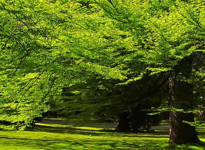 Green Trees In Stanley Park Art Print