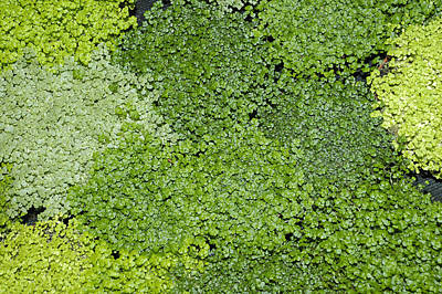 Photograph - Green Variations - Plants by Matthias Hauser
