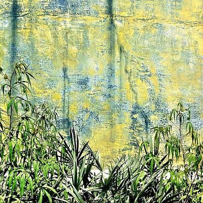 Apple Wall Art - Photograph - Greenery by Apple