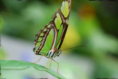 Designers Choice Photograph - Greenfly by Don Wright