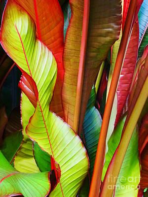 Photograph - Greenhouse Palms 2 by Stephen Mack
