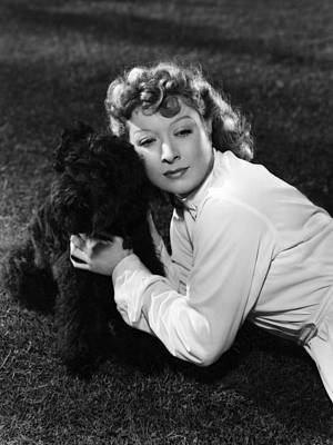 French Bull Dog Wall Art - Photograph - Greer Garson Posing With French Poodle by Everett