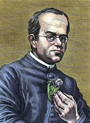 Selective Breeding Photograph - Gregor Mendel, Austrian Botanist by Bill Sanderson