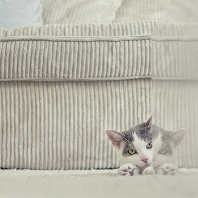 Grey And White Cat Peeking Around Corner Art Print by Cindy Prins