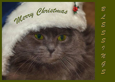 Photograph - Grey Cat Santa 2 by Joann Vitali
