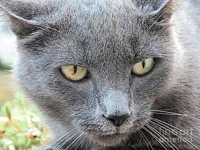 Photograph - Grey Kitty 2 by Tammy Herrin