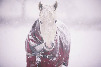 Cold Temperature Photograph - Grey Pony In Red Rug by Sasha Bell
