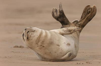 Grey Seal Pup Art Print
