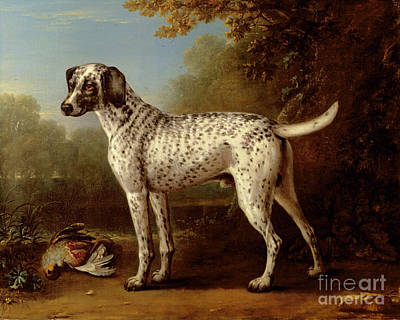Grey Spotted Hound Art Print