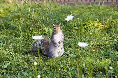 Grey Squirrel Art Print by Georgette Douwma