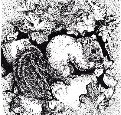 Drawing - Grey Squirrel by Suzanne McKee