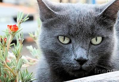 Photograph - Greycat by Tammy Herrin
