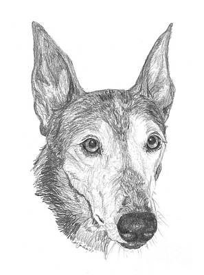 Rescued Greyhound Drawing - Greyhound by Deb Gardner