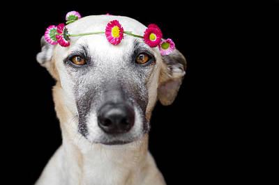 Greyhound Photograph - Greyhound by Elke Vogelsang