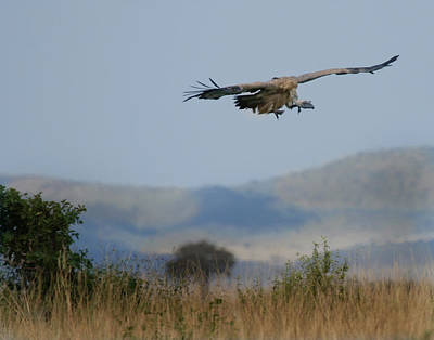Photograph - Griffon Vulture Masai Mara Kenya by Joseph G Holland
