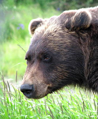 Photograph - Grizzly by Angie Vogel