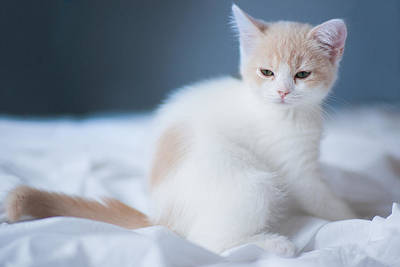 Photograph - Groggy Kitten On White Sheet by Benjamin Torode