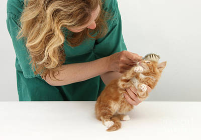 Pet Care Photograph - Grooming A Kitten by Mark Taylor