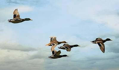 Group Flight Art Print by Fraida Gutovich
