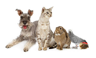 Group Of Domestic Pets  Print by Susan Schmitz