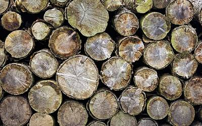 Background And Textures Photograph - Group Of Logs by John Short