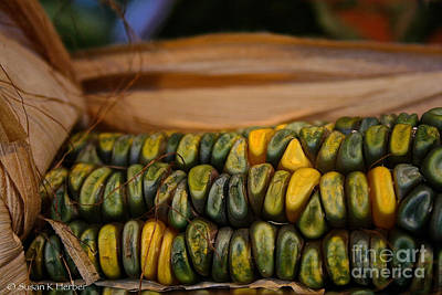 Photograph - Growing Green And Gold by Susan Herber