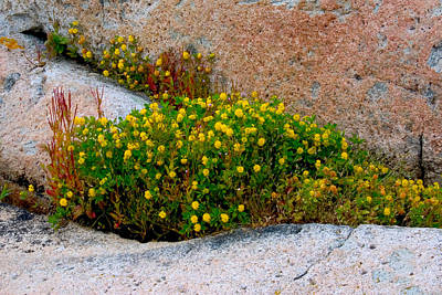 Photograph - Growing In The Cracks by Brent L Ander