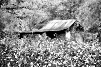 Photograph - Grownin' Cotton by Jan Amiss Photography