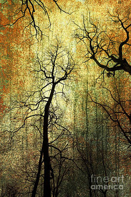 Grunge Forest Original by Christophe ROLLAND