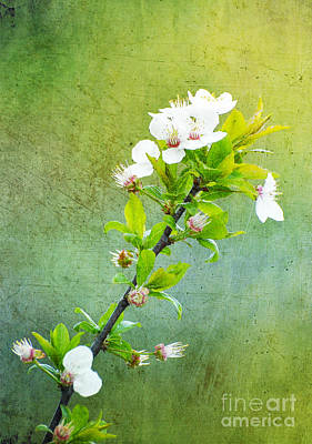 Grunge Style Apple Flowers Original by Nicoleta Raftu